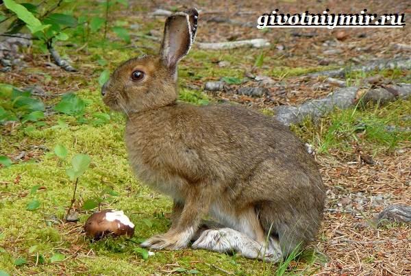 Животные-тайги-Описание-и-особенности-животных-тайги-7