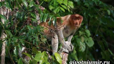 Животные тропического леса