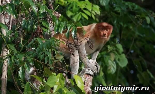 Реферат животные тропического леса 420