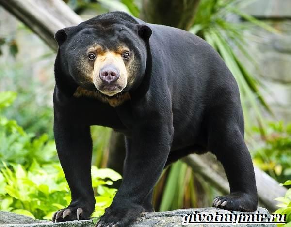 Животные-тропического-леса-13
