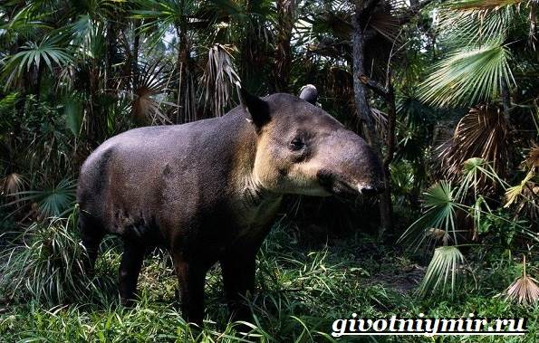 Животные-тропического-леса-14