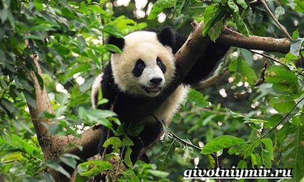 Животные-тропического-леса-15