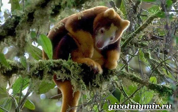 Животные-тропического-леса-17