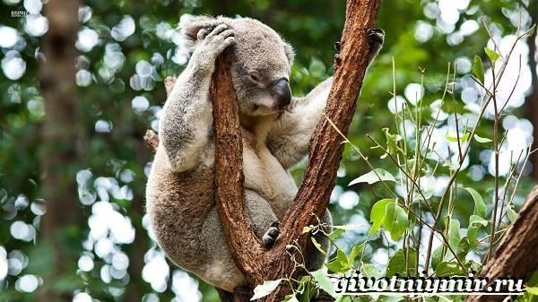 Животные-тропического-леса-18