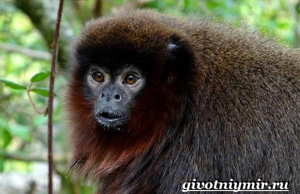 Животные-тропического-леса-4