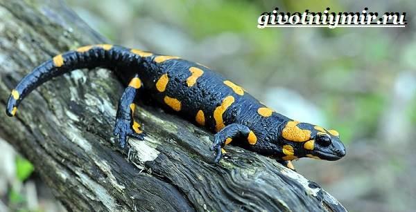 Животные-тропического-леса-7