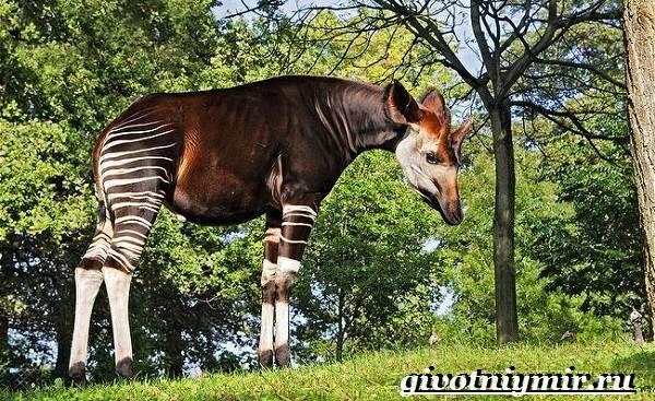 Животные-тропического-леса-8