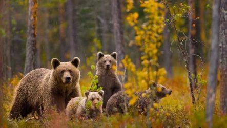 Животные Урала. Описания, названия и особенности животных Урала