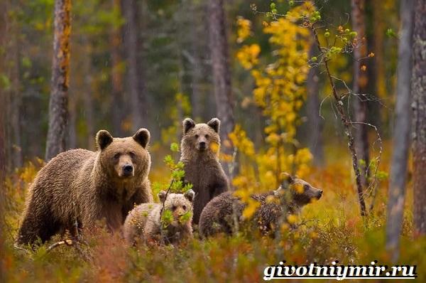 Растительный и животный мир среднего Урала
