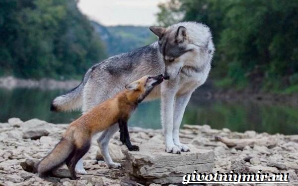 Животные-Урала-Описания-названия-и-особенности-животных-Урала-11