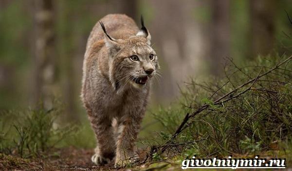 Животные-Урала-Описания-названия-и-особенности-животных-Урала-13