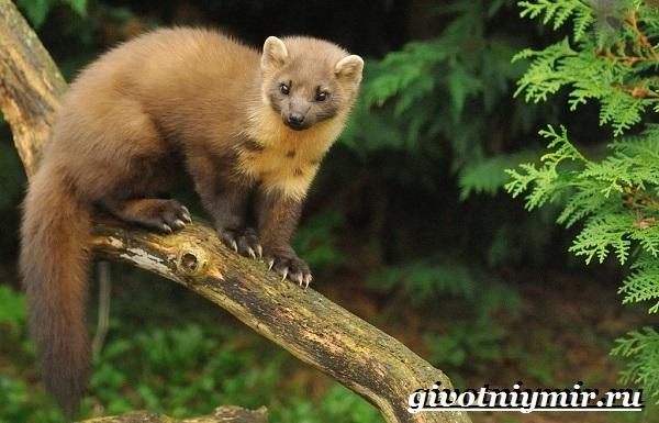 Животные-Урала-Описания-названия-и-особенности-животных-Урала-15