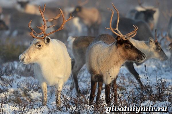 Животные-Урала-Описания-названия-и-особенности-животных-Урала-3