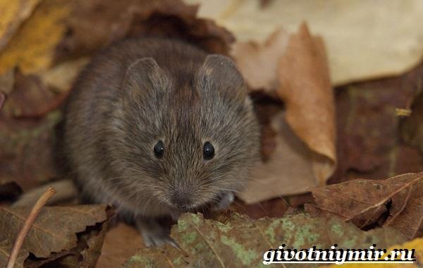 Животные-Урала-Описания-названия-и-особенности-животных-Урала-6