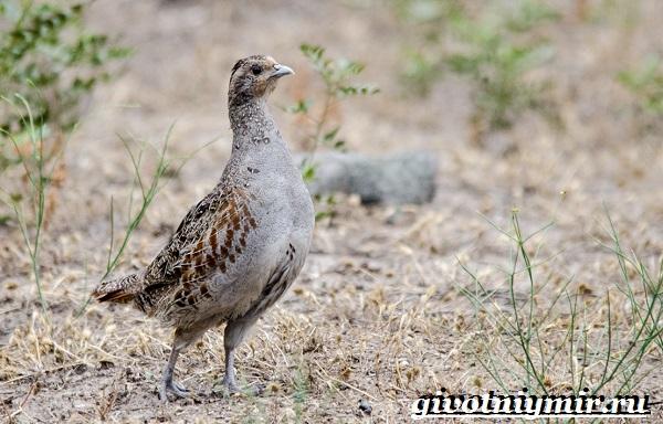 Животные-Урала-Описания-названия-и-особенности-животных-Урала-7