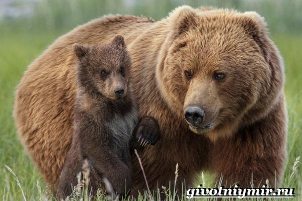 Животные-Урала-Описания-названия-и-особенности-животных-Урала-8