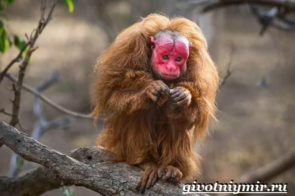 Животные-Южной-Америки-Описание-и-особенности-животных-Южной-Америки-11