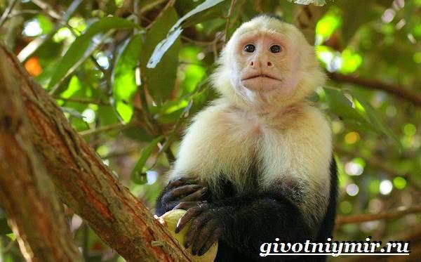 Животные-Южной-Америки-Описание-и-особенности-животных-Южной-Америки-13