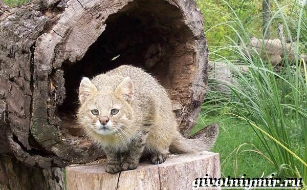 Животные-Южной-Америки-Описание-и-особенности-животных-Южной-Америки-18