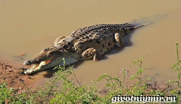 Животные-Южной-Америки-Описание-и-особенности-животных-Южной-Америки-20