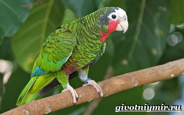 Животные-Южной-Америки-Описание-и-особенности-животных-Южной-Америки-25