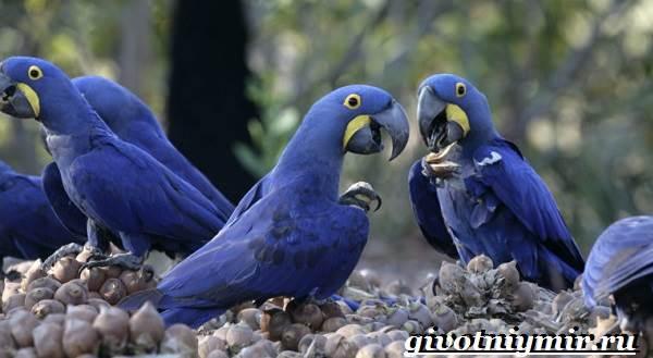 Животные-Южной-Америки-Описание-и-особенности-животных-Южной-Америки-26