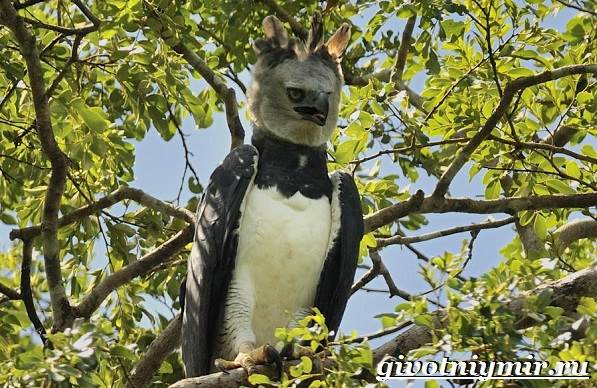 Животные-Южной-Америки-Описание-и-особенности-животных-Южной-Америки-28