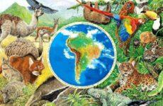 Животные Южной Америки. Описание и особенности животных Южной Америки