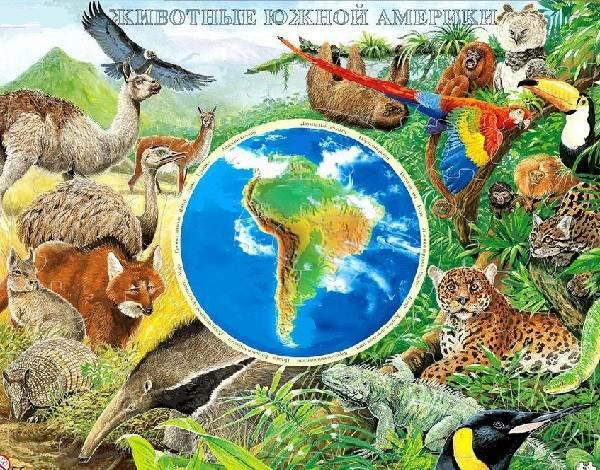 Животные-Южной-Америки-Описание-и-особенности-животных-Южной-Америки-3