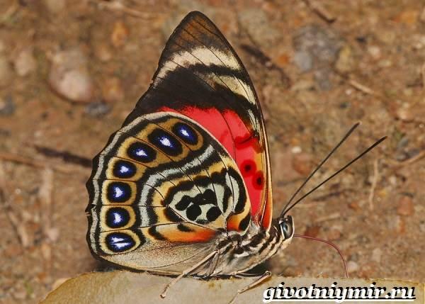 Животные-Южной-Америки-Описание-и-особенности-животных-Южной-Америки-35