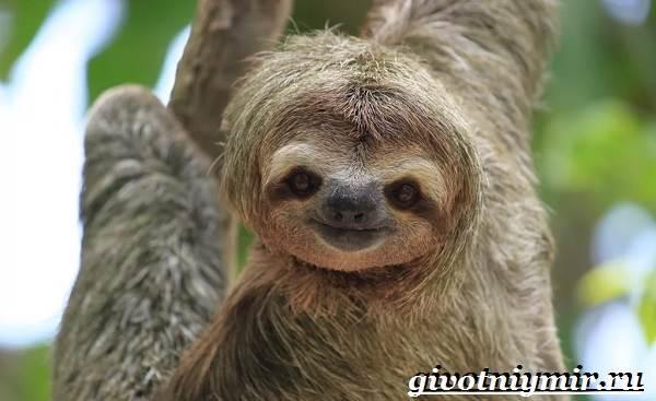 Животные-Южной-Америки-Описание-и-особенности-животных-Южной-Америки-4