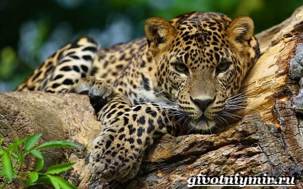 Животные-Южной-Америки-Описание-и-особенности-животных-Южной-Америки-7