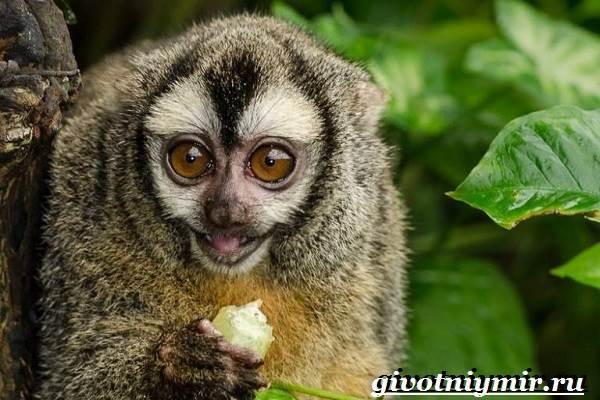 Животные-Южной-Америки-Описание-и-особенности-животных-Южной-Америки-8