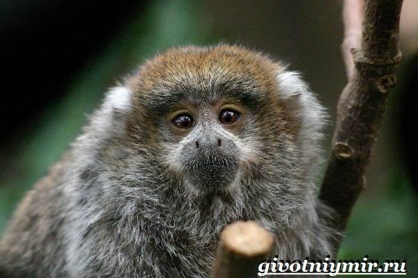 Животные-Южной-Америки-Описание-и-особенности-животных-Южной-Америки-9