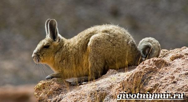 Животные-Южной-Америки-Описание-и-особенности-животных-Южной-Америки