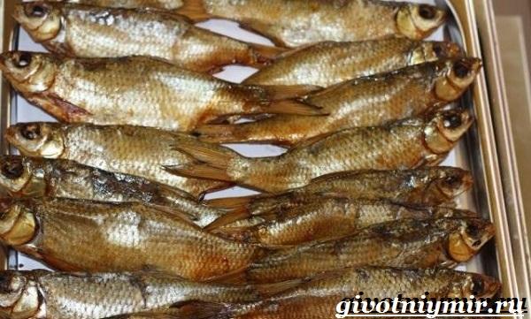 Вобла-рыба-Образ-жизни-и-среда-обитания-рыбы-воблы-8
