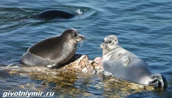 Животные-Байкала-Названия-описание-и-особенности-животных-Байкала-1