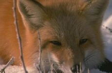 Животные Байкала. Названия, описание и особенности животных Байкала
