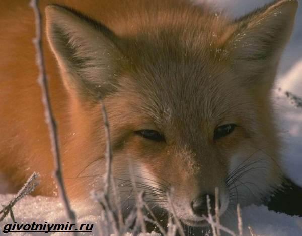Животные-Байкала-Названия-описание-и-особенности-животных-Байкала-10
