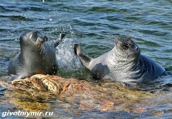 Животные-Байкала-Названия-описание-и-особенности-животных-Байкала-11