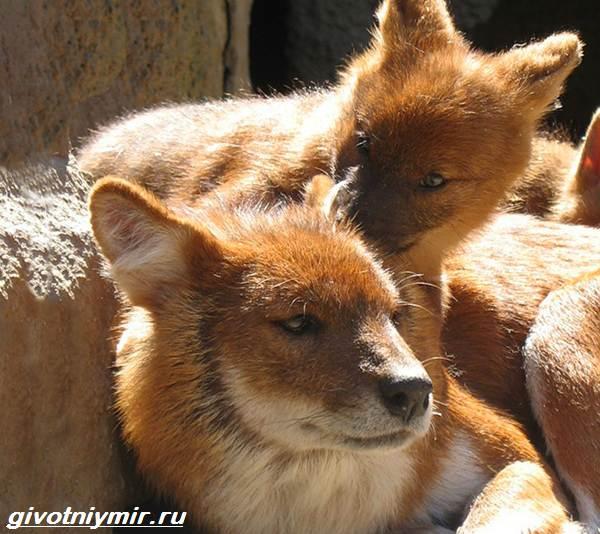 Животные-Байкала-Названия-описание-и-особенности-животных-Байкала-5