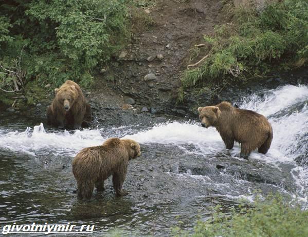Животные-Байкала-Названия-описание-и-особенности-животных-Байкала-6