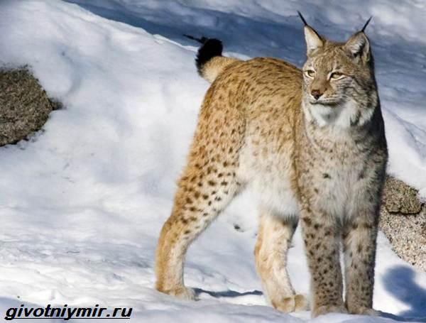 Животные-Байкала-Названия-описание-и-особенности-животных-Байкала-7