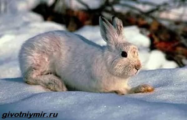 Животные-Байкала-Названия-описание-и-особенности-животных-Байкала-9