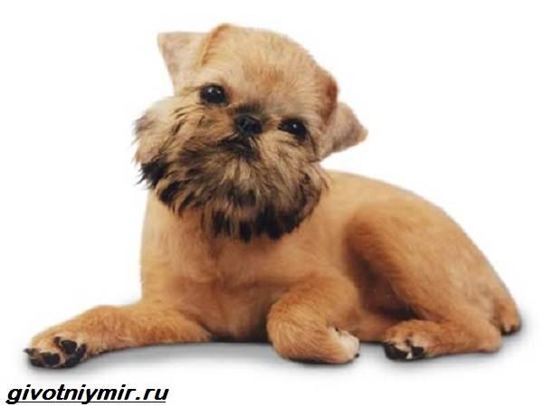 собака карликовый
