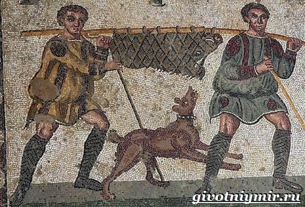 Охотничьи-собаки-Описание-особенности-и-названия-охотничьих-пород-собак-1