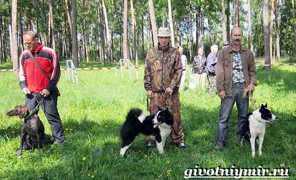 Охотничьи-собаки-Описание-особенности-и-названия-охотничьих-пород-собак-12
