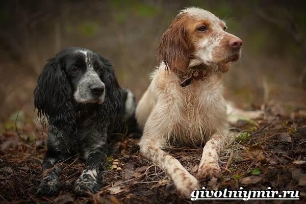 Охотничьи-собаки-Описание-особенности-и-названия-охотничьих-пород-собак-18