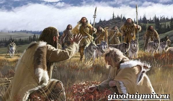 Охотничьи-собаки-Описание-особенности-и-названия-охотничьих-пород-собак-2