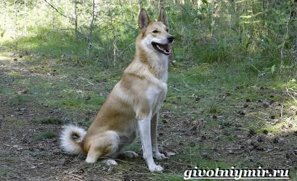 Охотничьи-собаки-Описание-особенности-и-названия-охотничьих-пород-собак-8